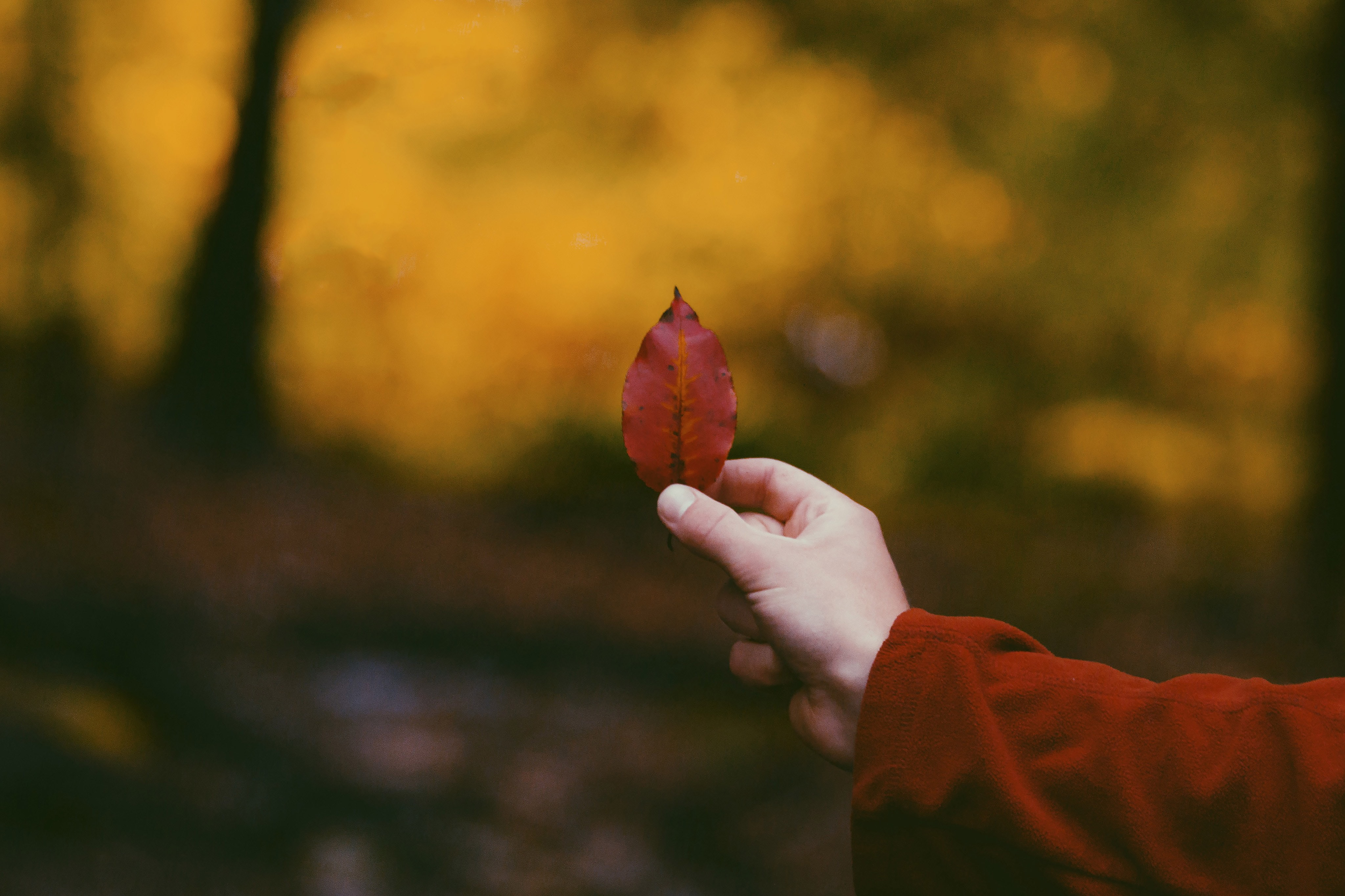 person holding red leaf