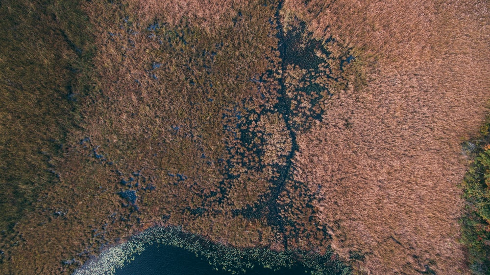 aerial photography of brown grass