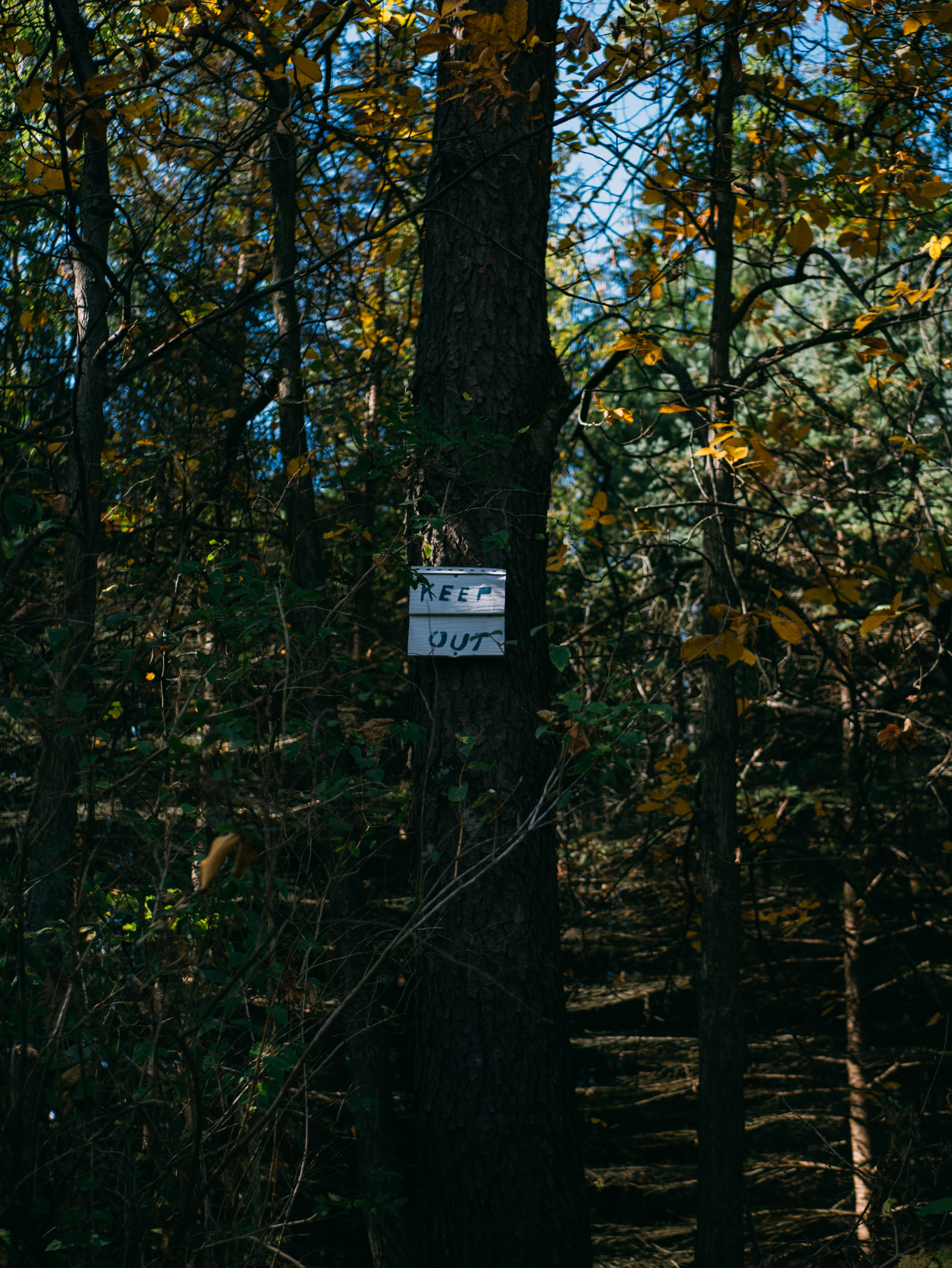 keep out sign board on brown tree