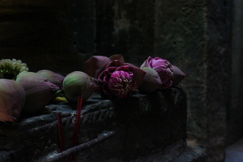 purple flowers on top of black steel surface