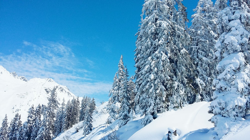 photography of snowed forest