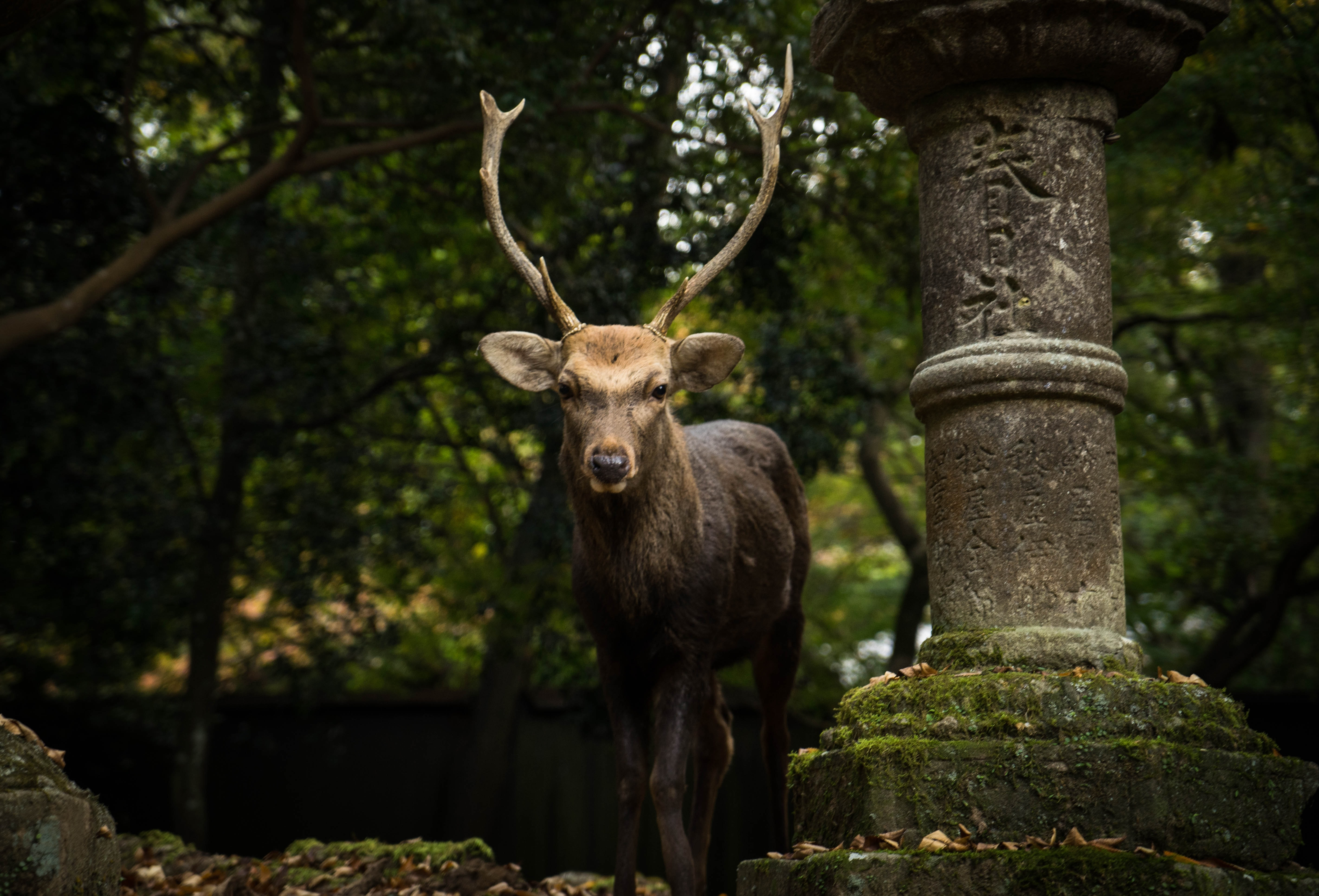 black deer standing beside post
