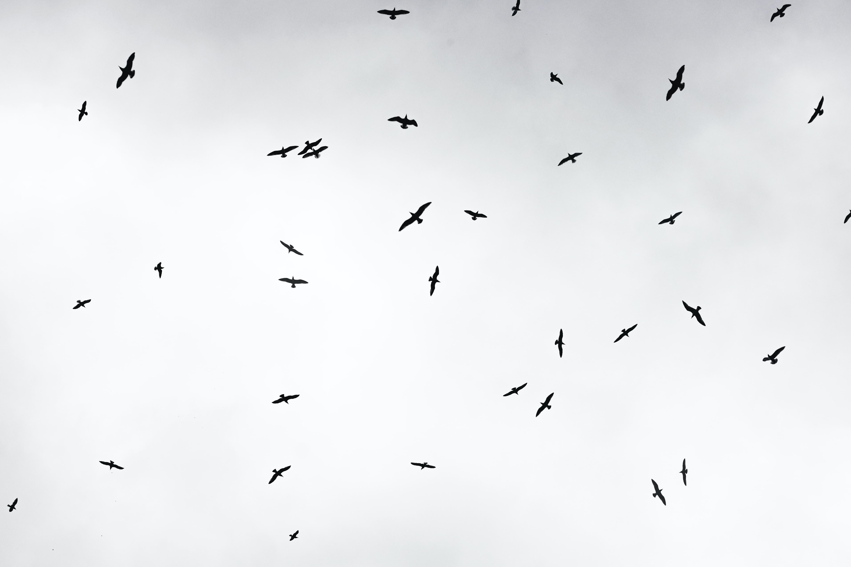 Fly Away  sadness stories