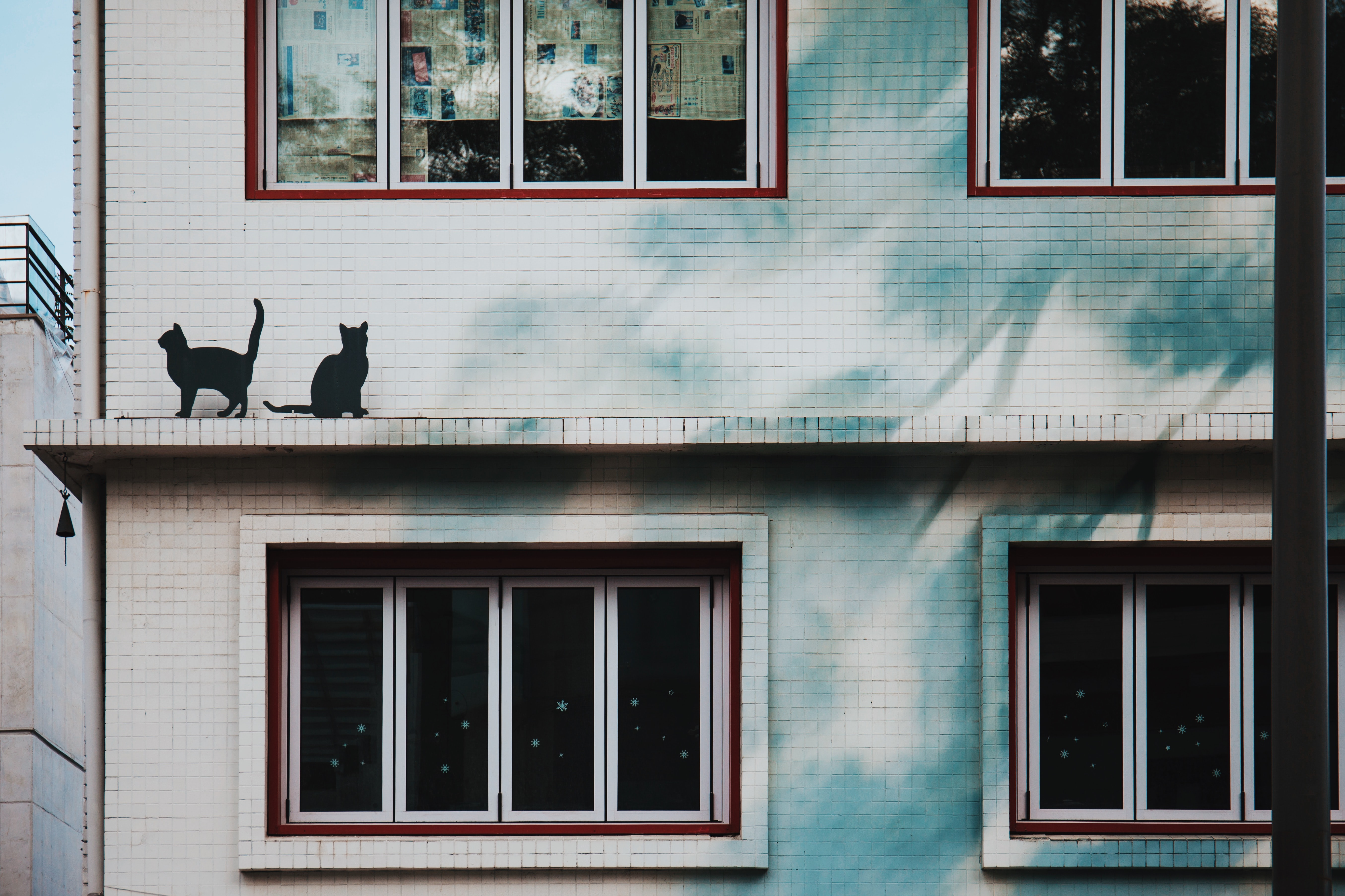 two black cats on white high-rise building