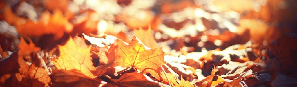 NY Bethel Basic with Fall Foliage Cruise