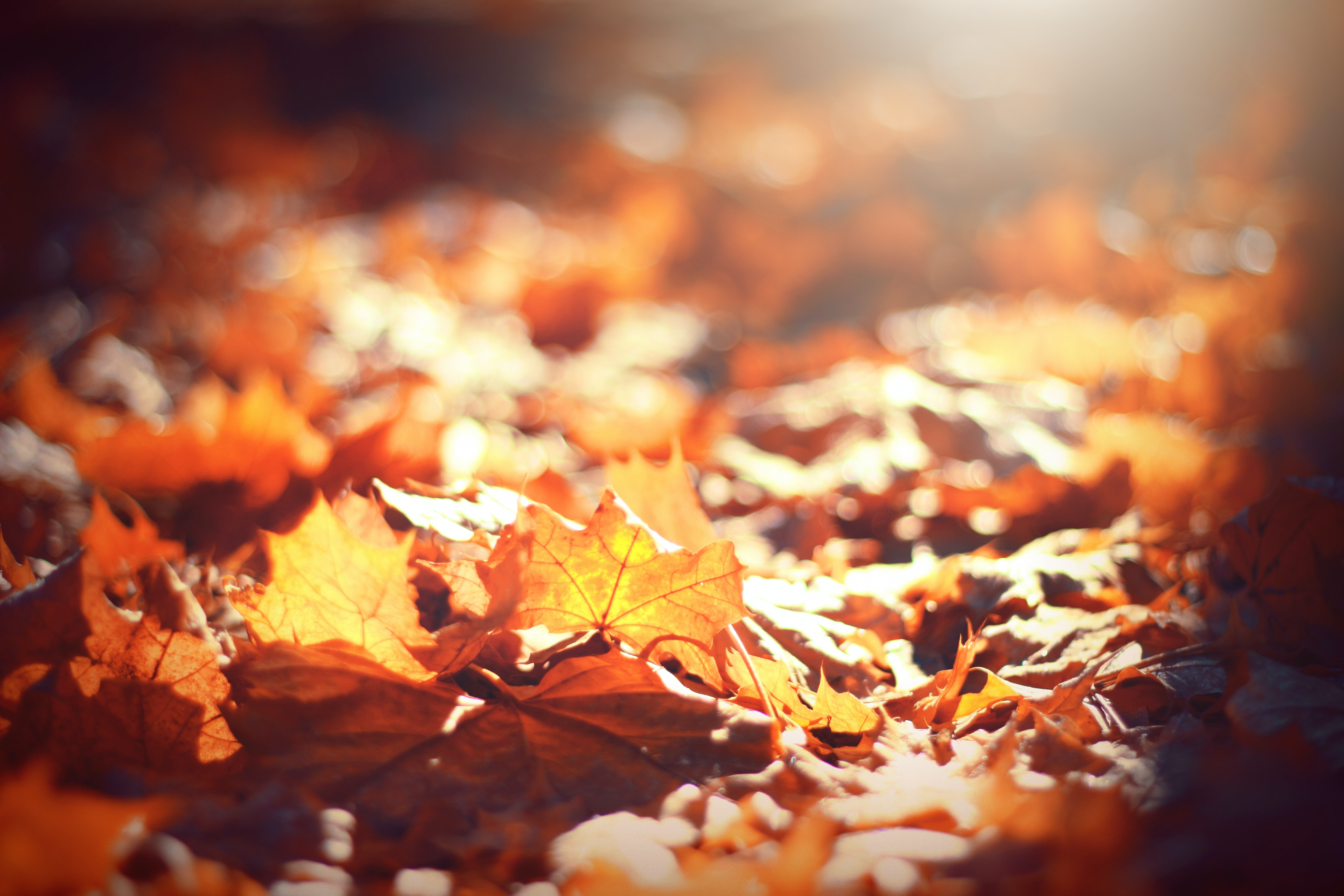 selective focus photography of brown leaves