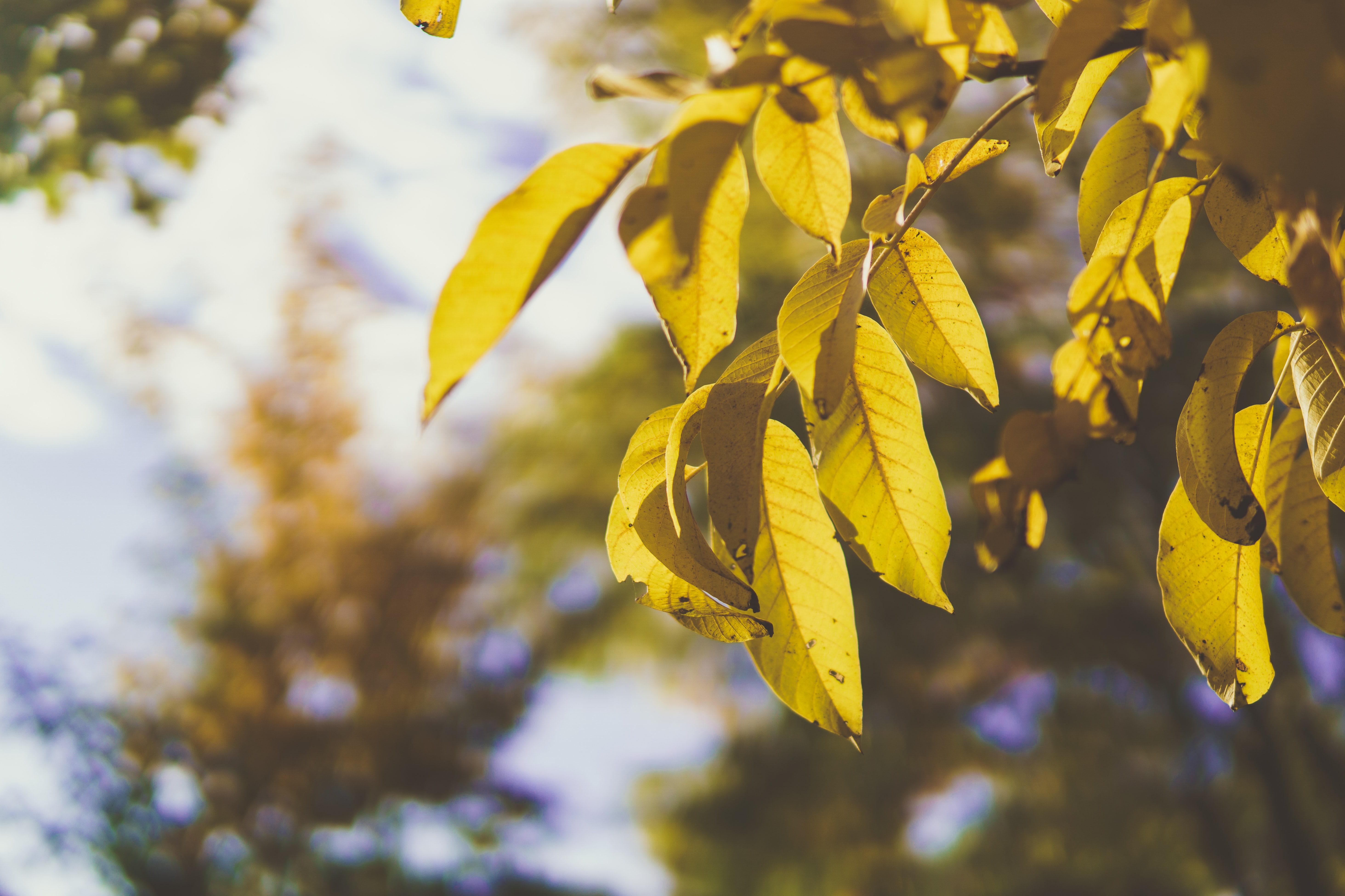withered leaves in shallow photography