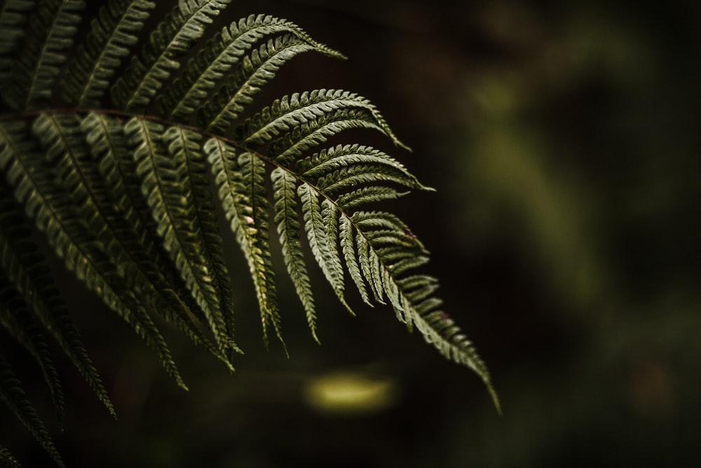 photo of green Fern plant leaf