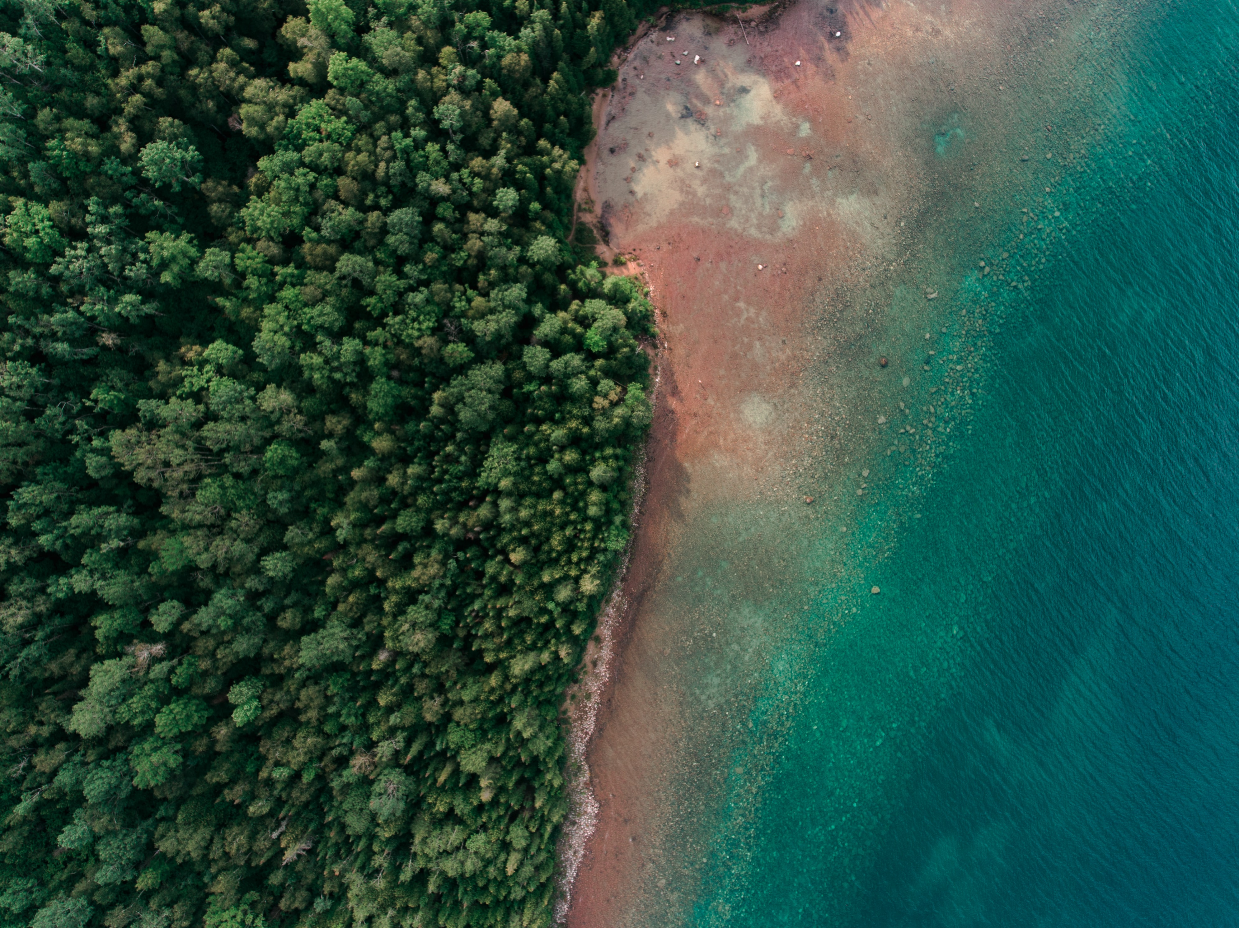 aerial photography of seashore and tree