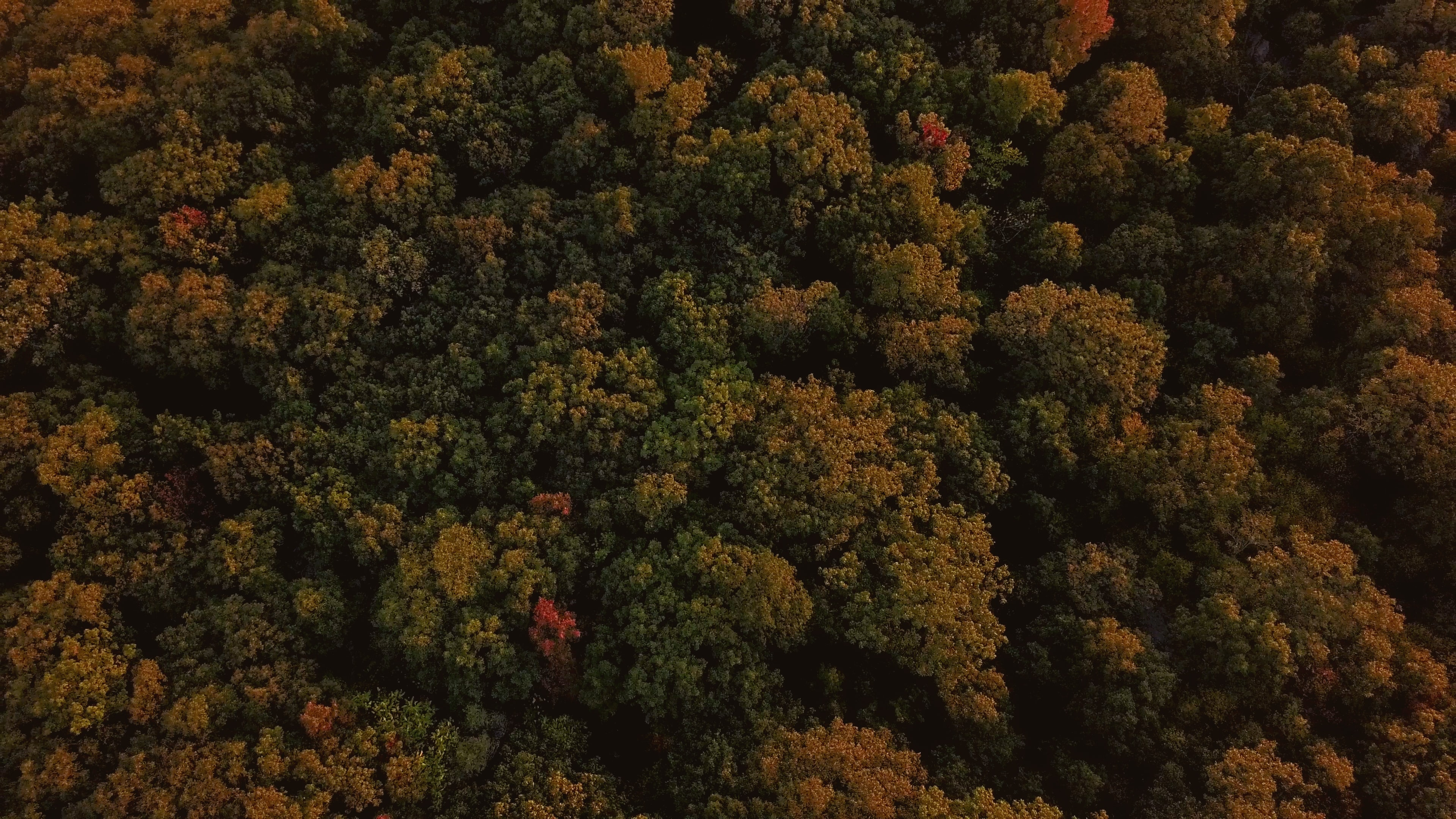 aerial view of green and brown forest at daytime