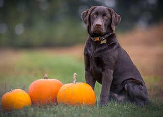 black dog sitting on grass