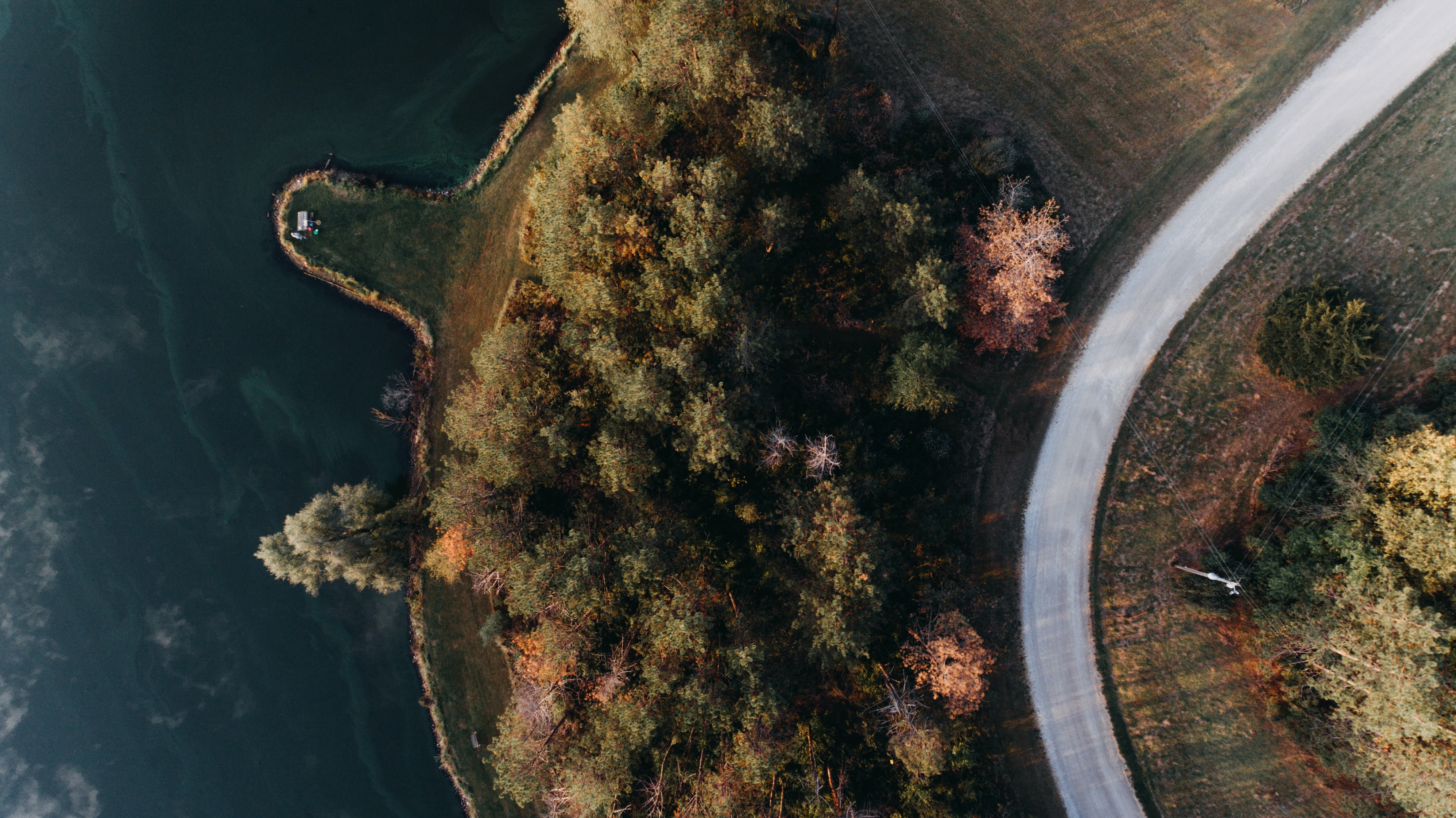 aerial view photography of tree beside lake