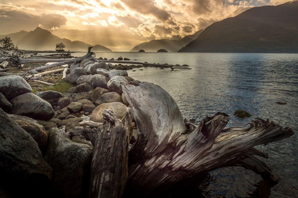 brown driftwood beside body of water during sunset