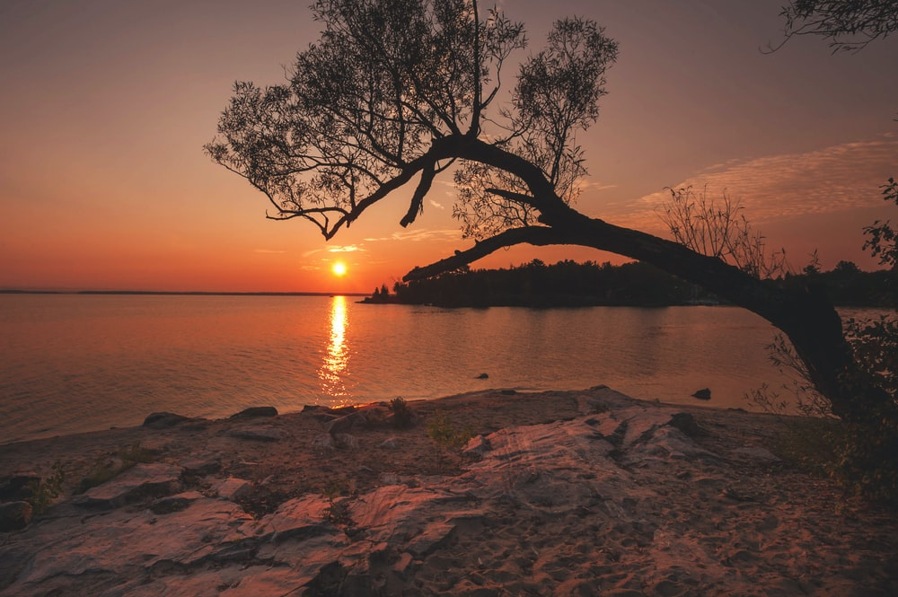 silhouette of tree near body of water at golden hour