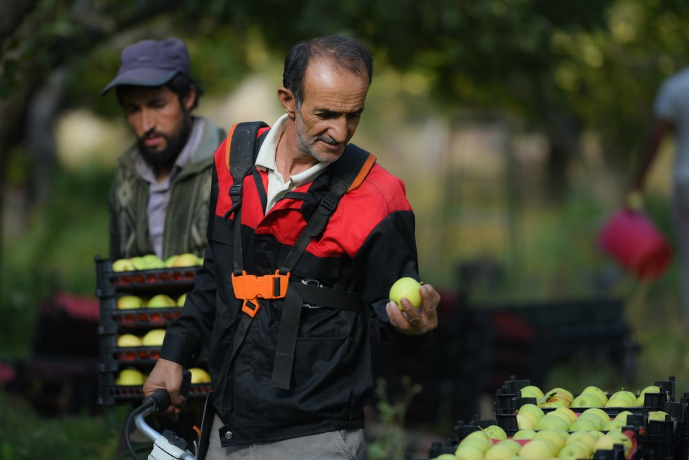 man holding green apple beside man carrying bundle of apples