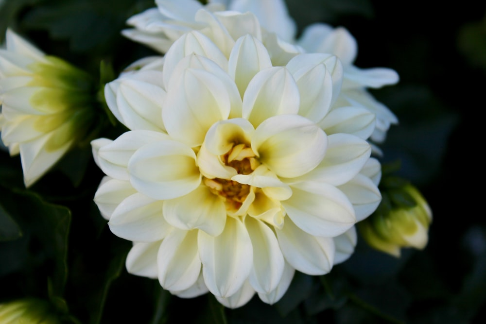 100 white flower pictures download free images on unsplash 4 mightylinksfo Images