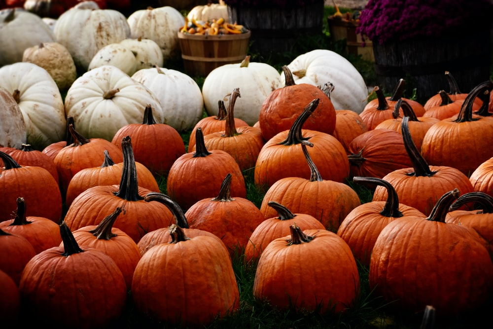 pumpkin lot