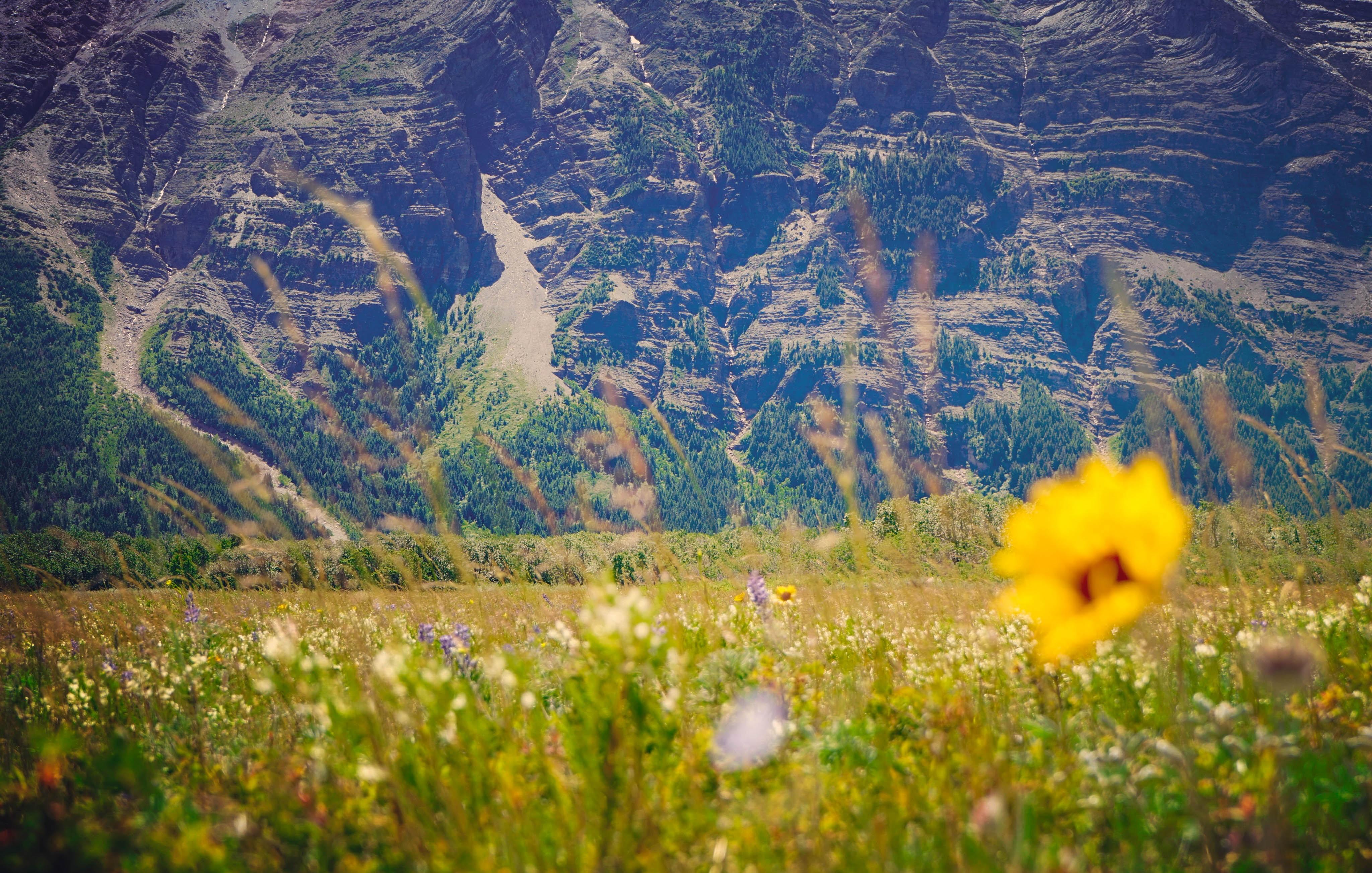 yellow petaled flower on grass field