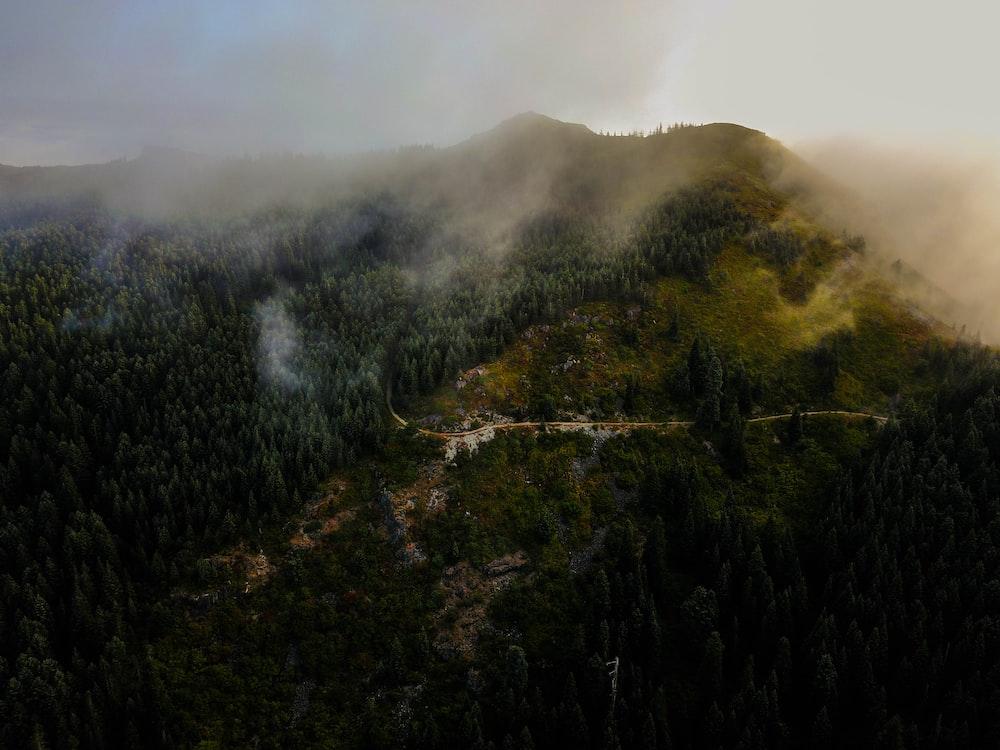 green trees mountain taken at daytime