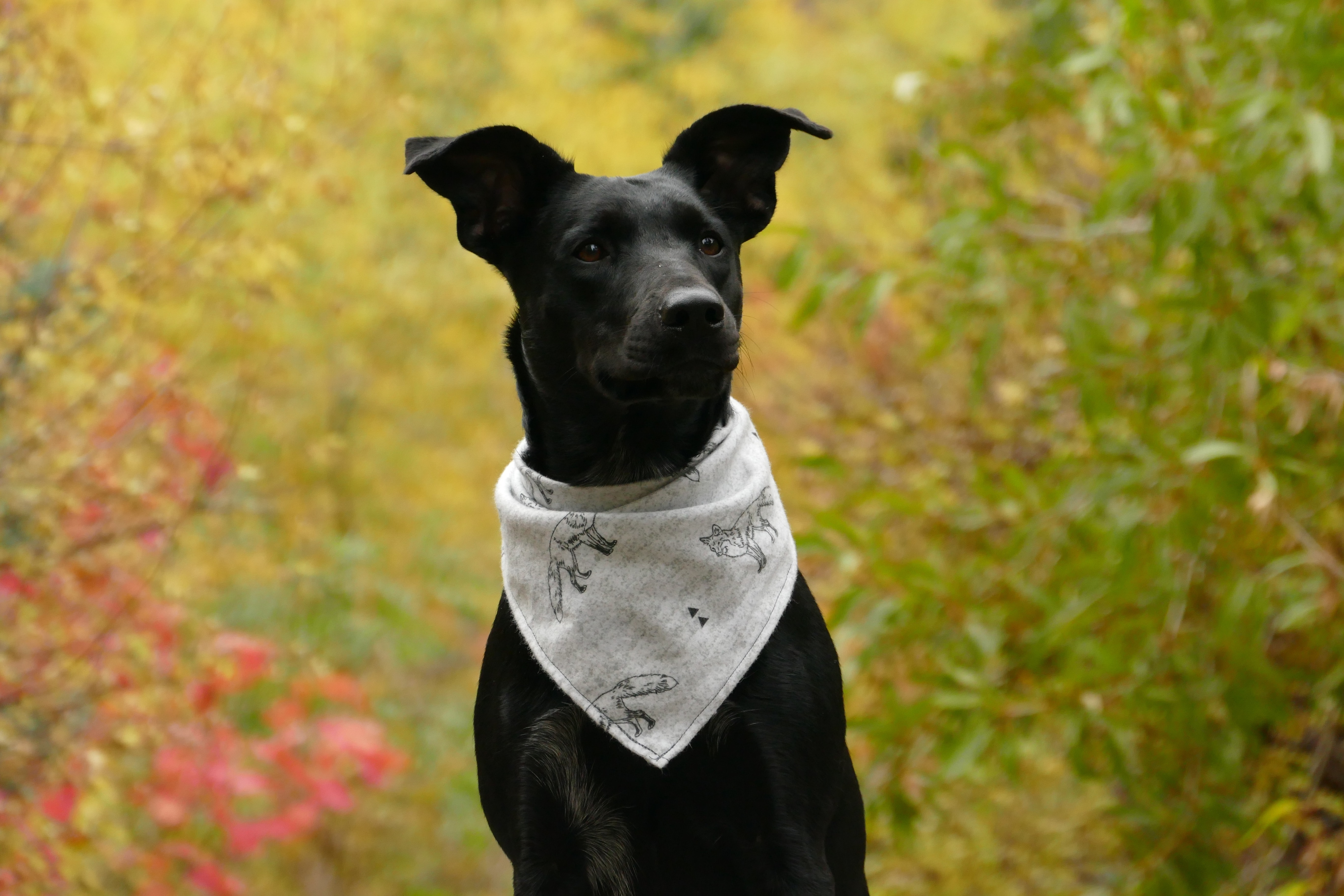 black dog wearing white scarf shallow focus photography