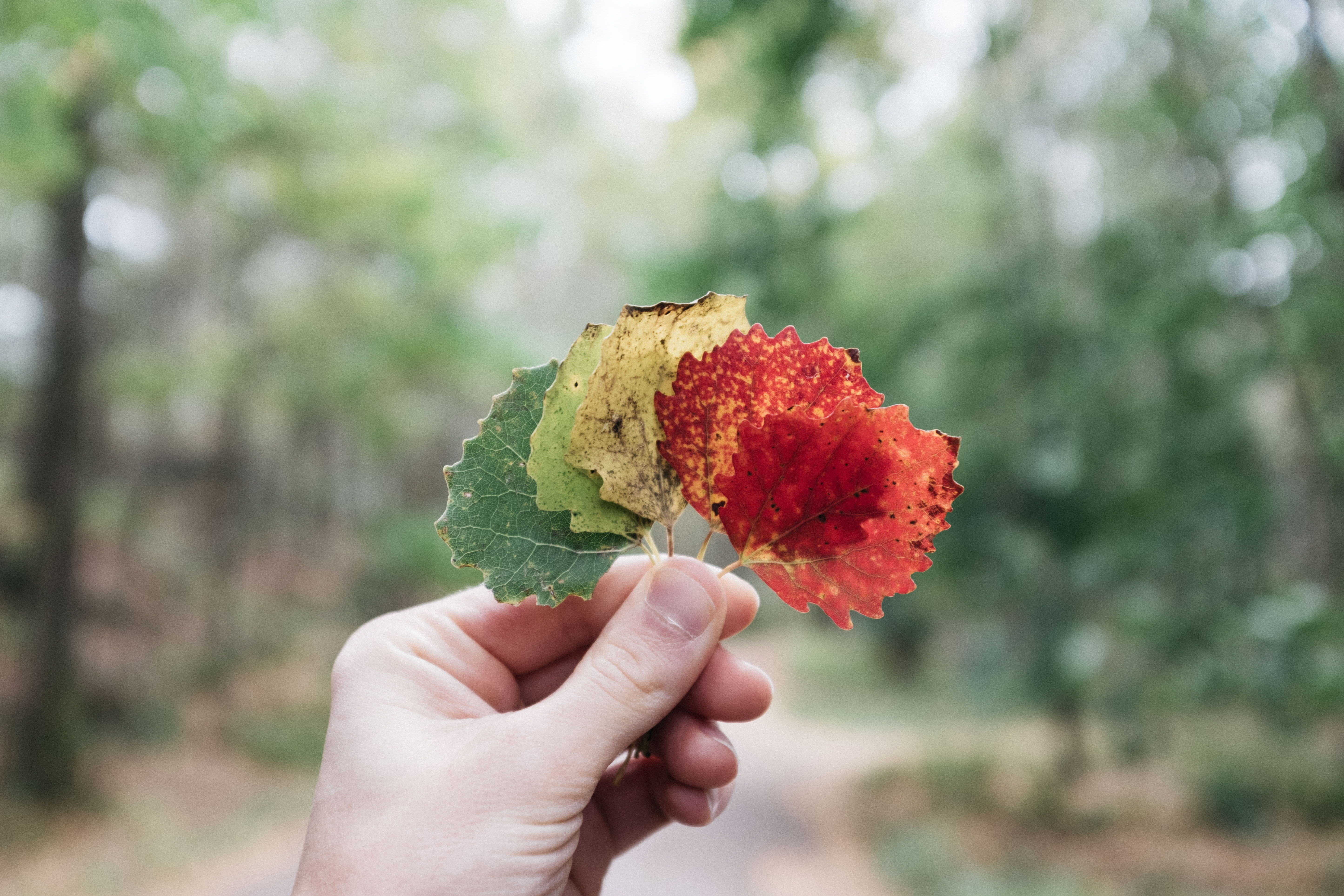 person holding assorted-color leaves
