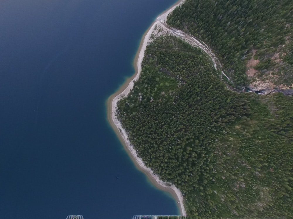 aerial photography of forest near ocean