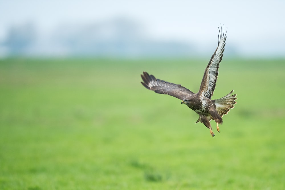 focus photography of bird flying above the grass field