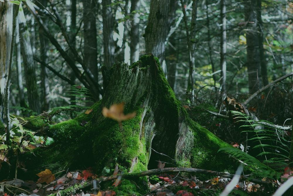 green tree trunk
