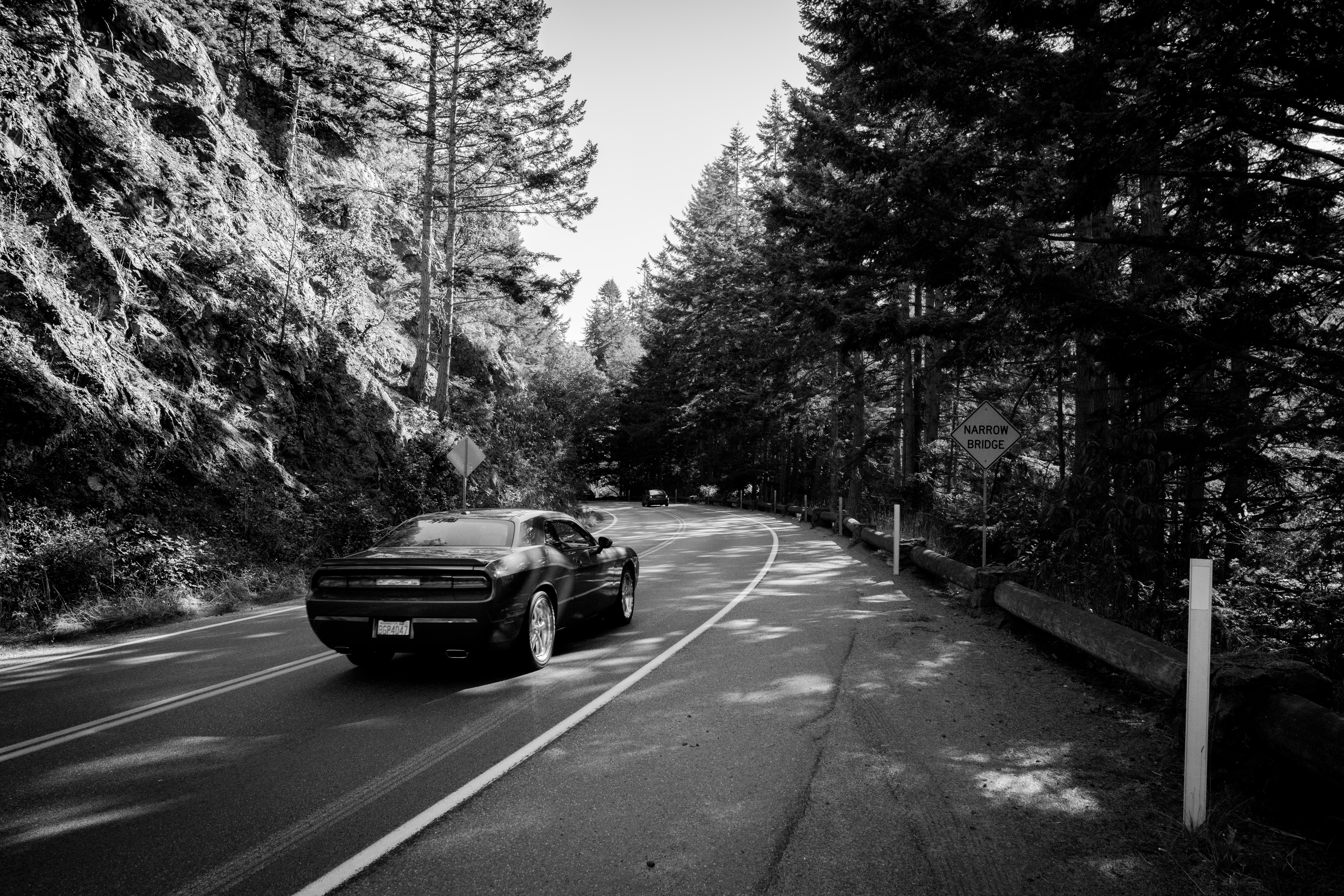 grayscale photography of car on road in between trees
