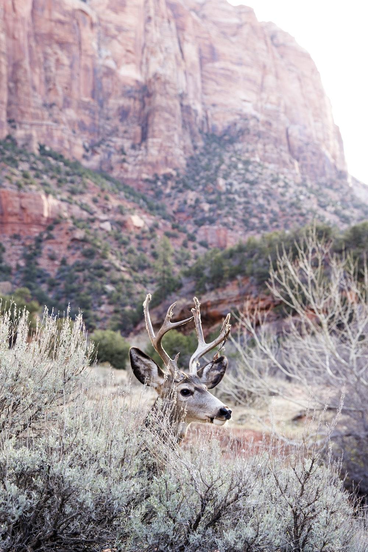 brown deer behind green grass near mountain