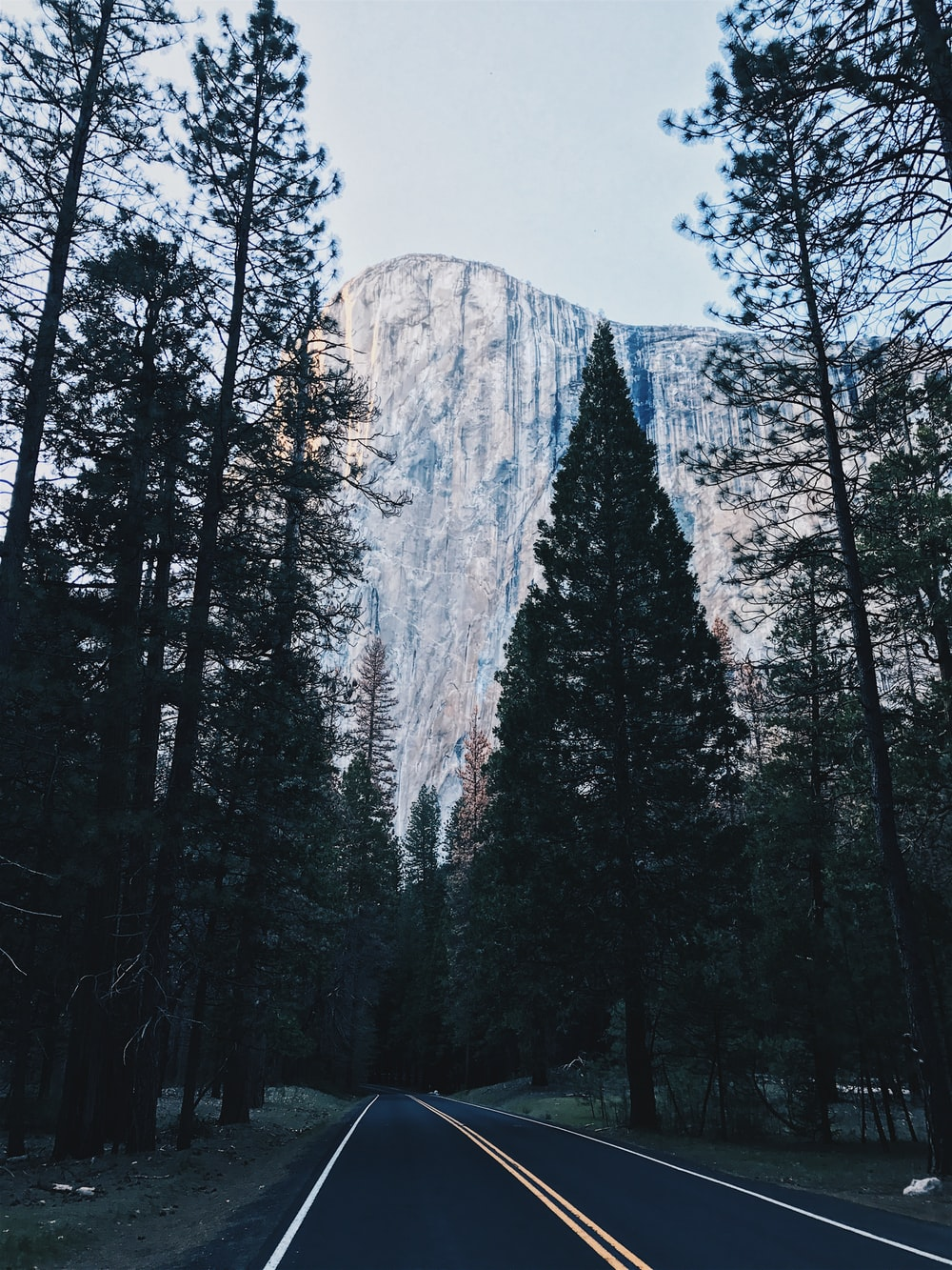 landscape photo of a trees and mountain