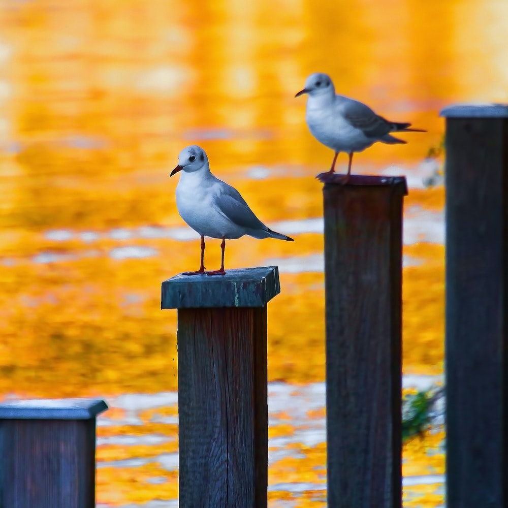 selective focus photography of gray short-beaked bird on wooden stand