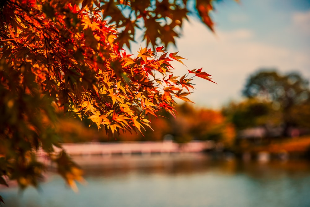 shallow focus photography of orange leafed tree during daytime