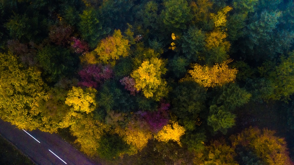 top-view of assorted-color trees