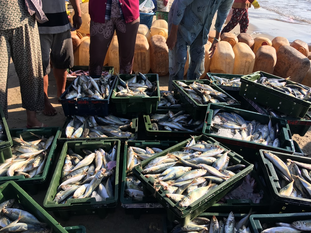 edible fish on crate lot
