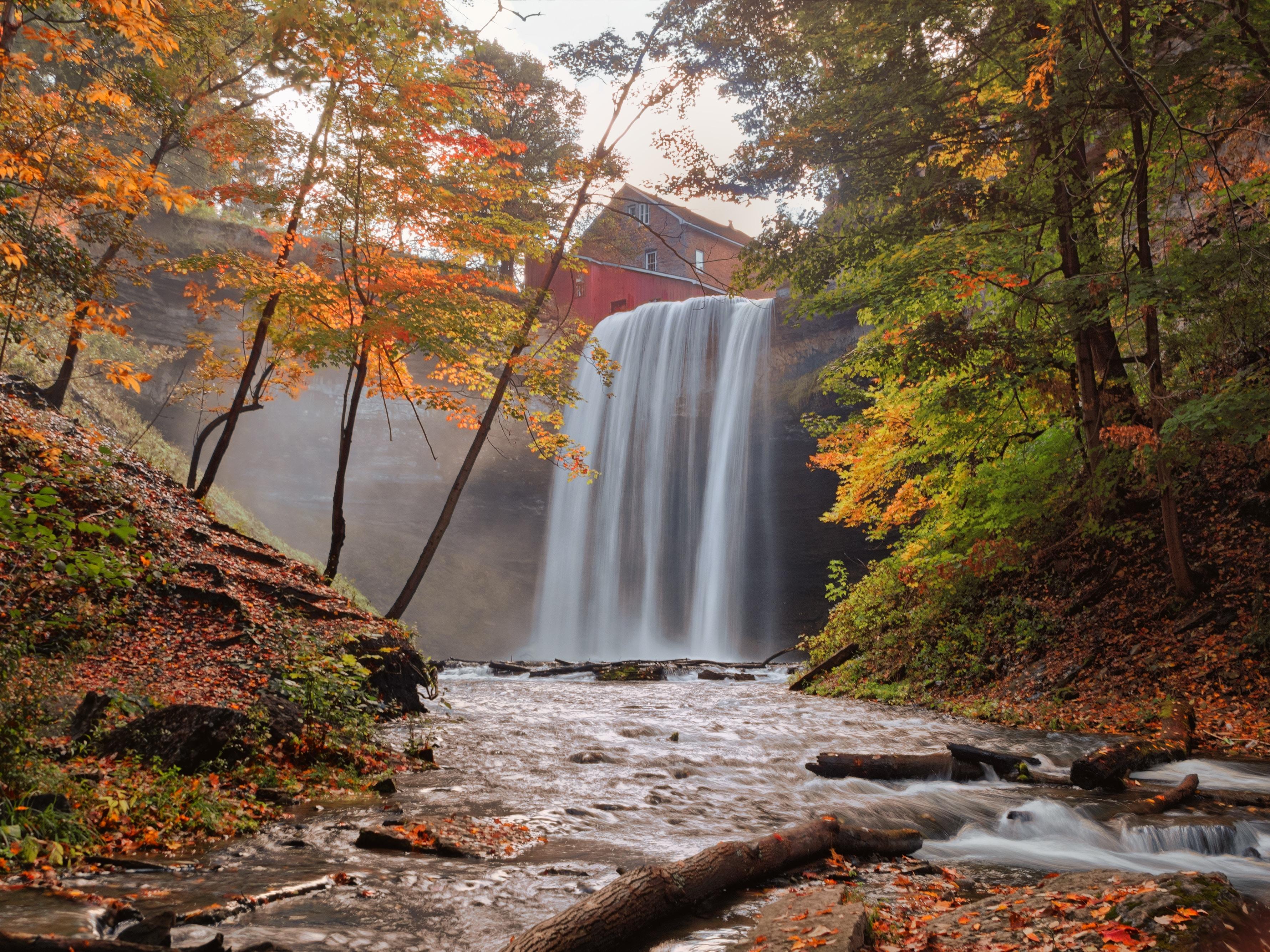 waterfalls between green and orange leaf trees