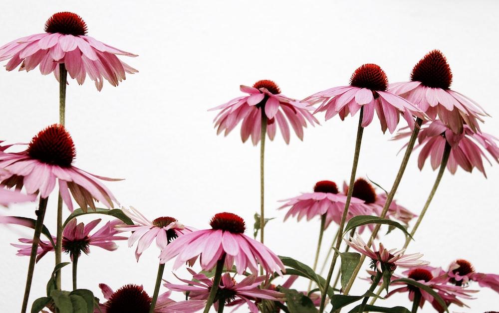 pink flowering plant macro photography