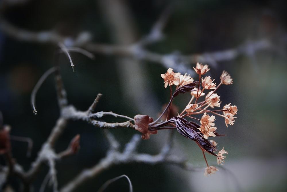 selective focus of brown petaled flower