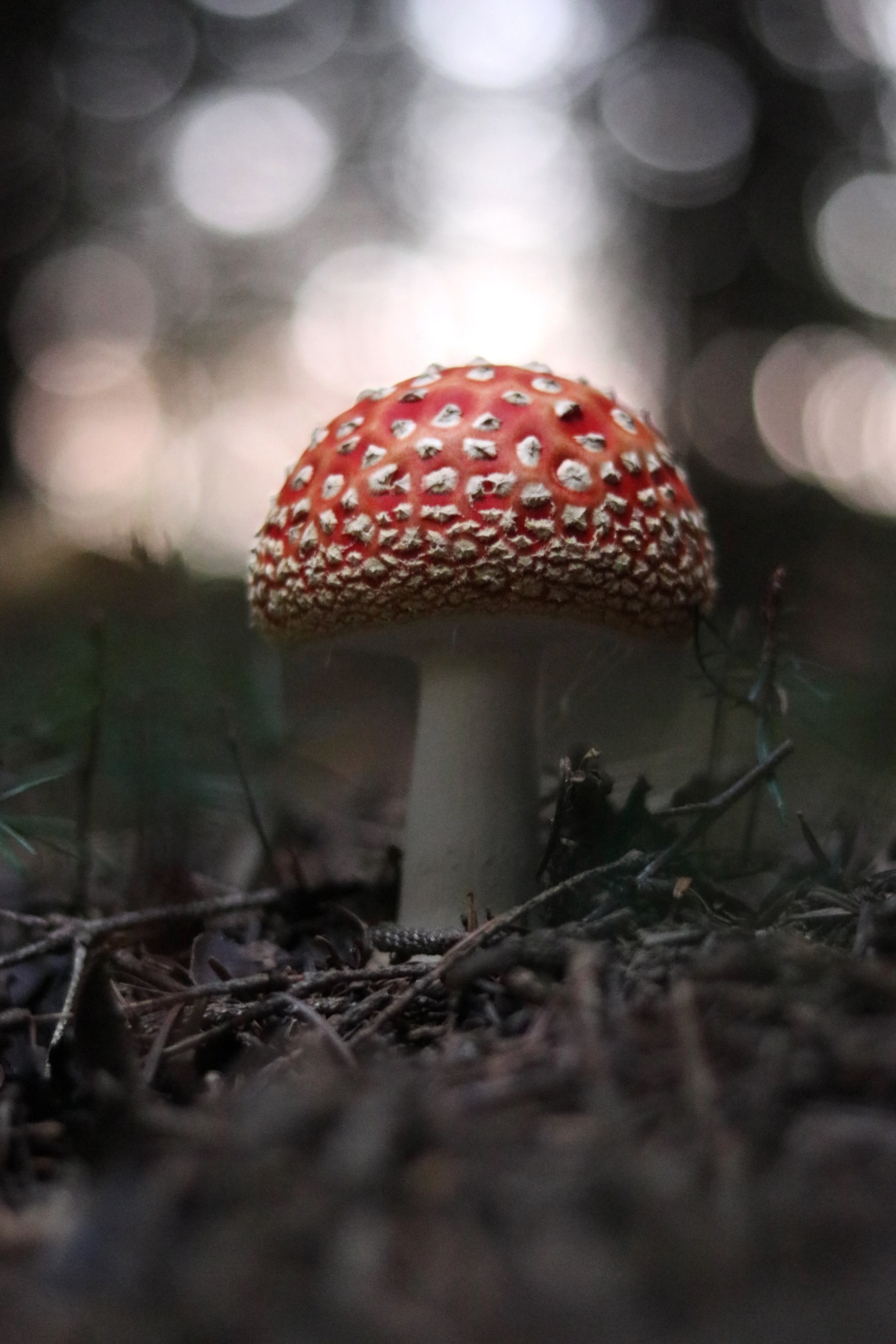 bokeh photography of red mushroom