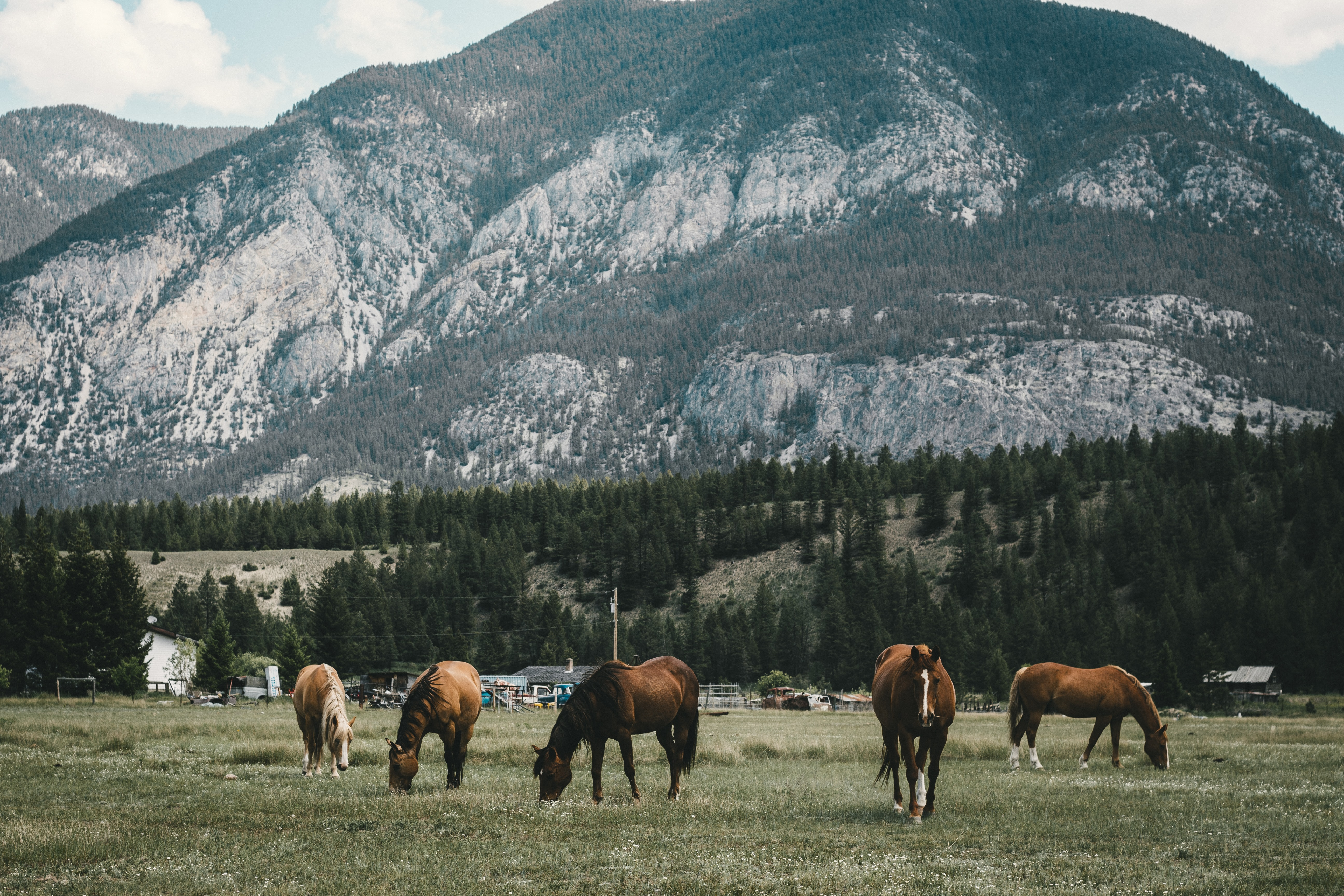 several horses eating grass on field