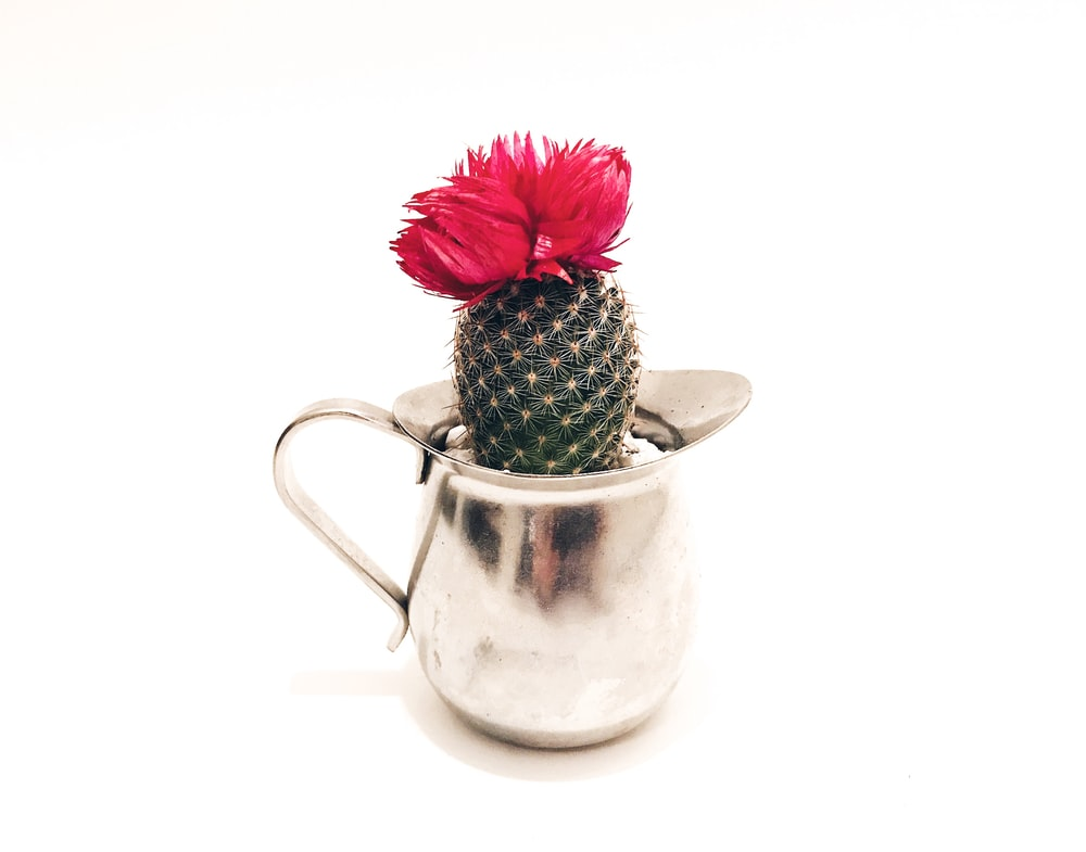 green and red cactus in white ceramic vase