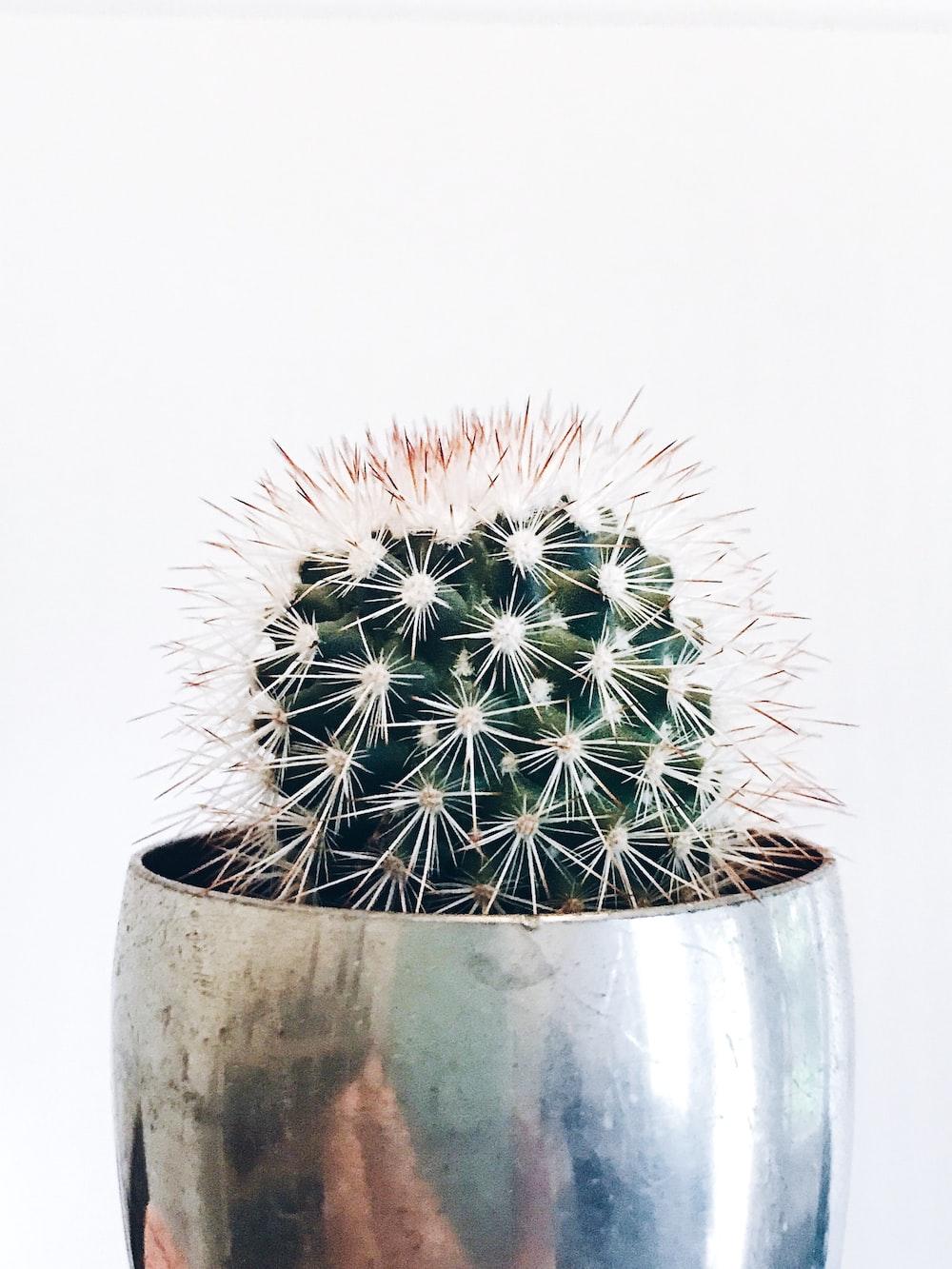green cactus in gray pot