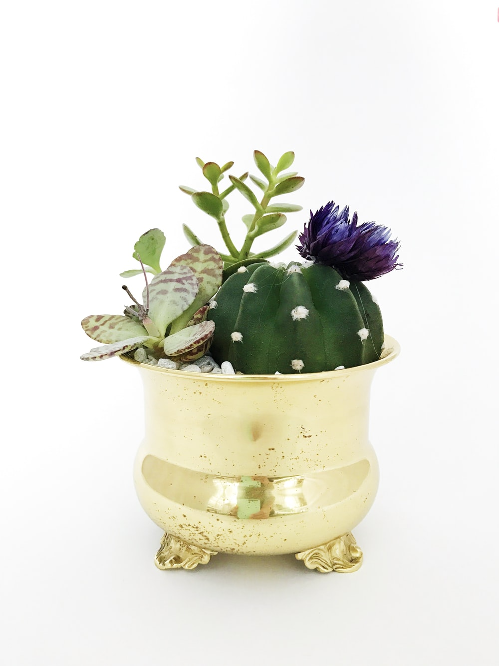green and purple flower in gold vase