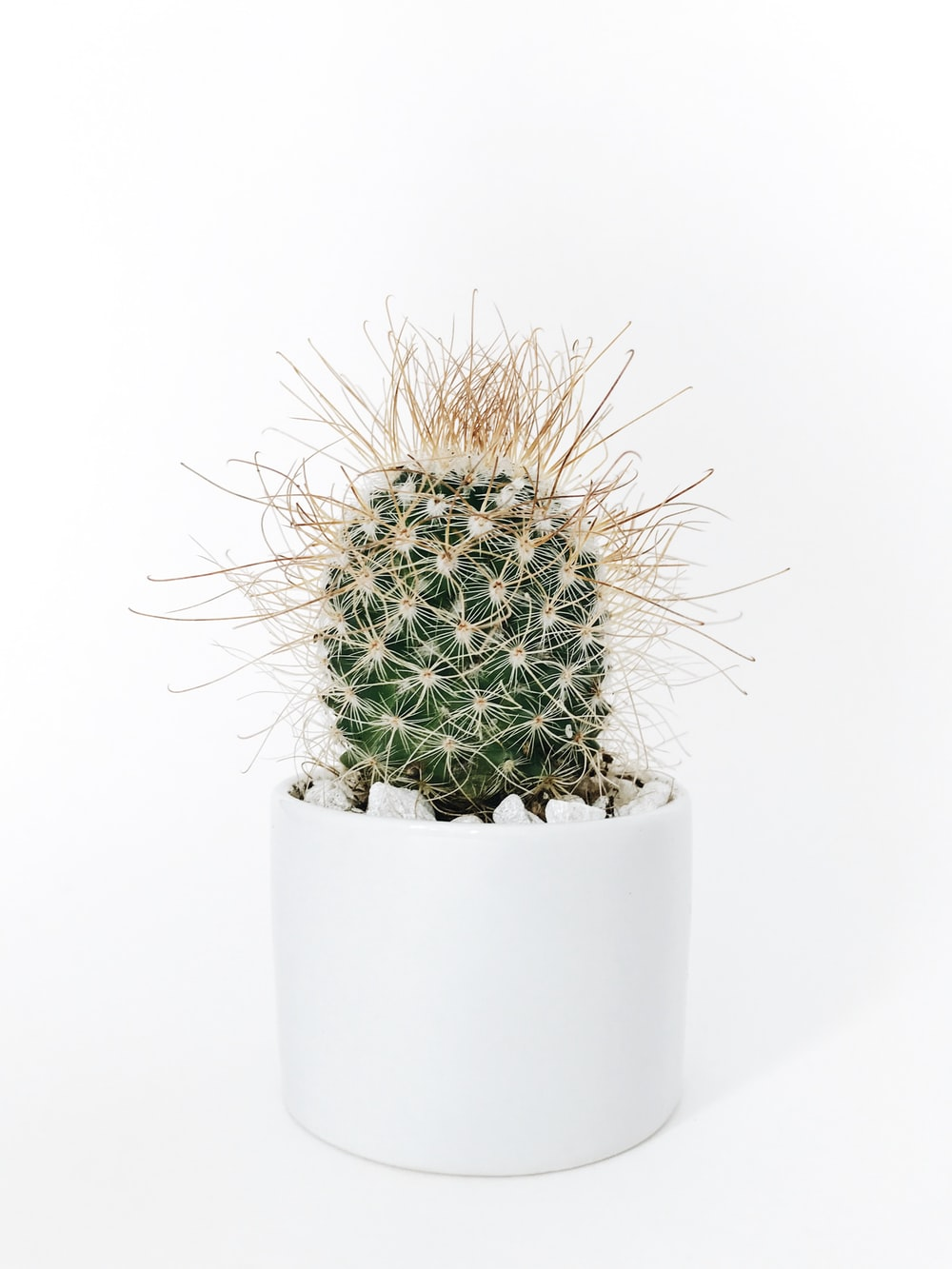 green cactus plant in vase
