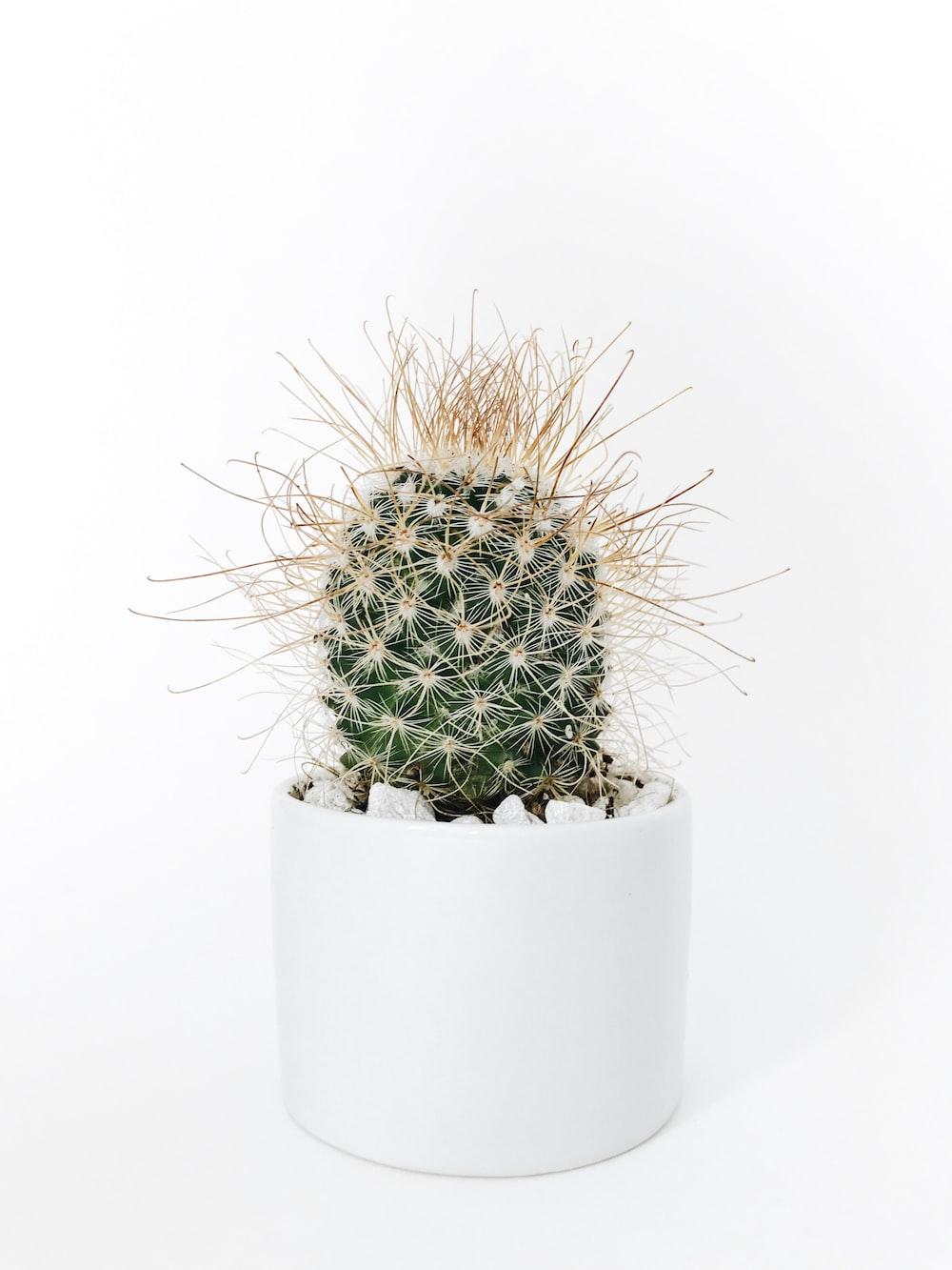 green cactus plant in vase