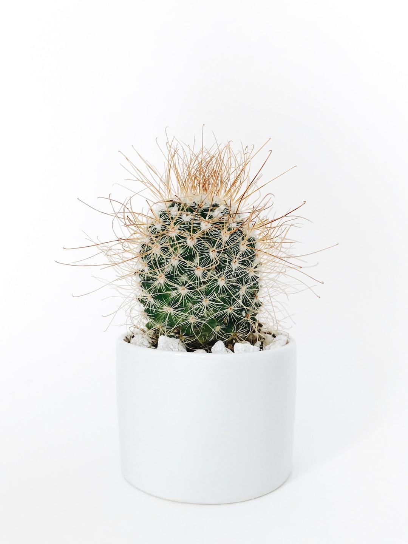 London Cactus Mini