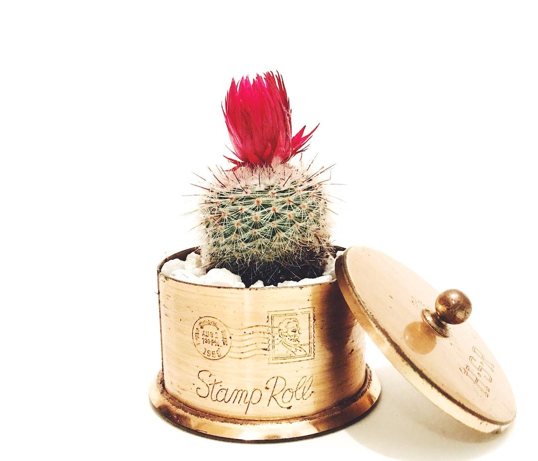 Troy Cactus Mini