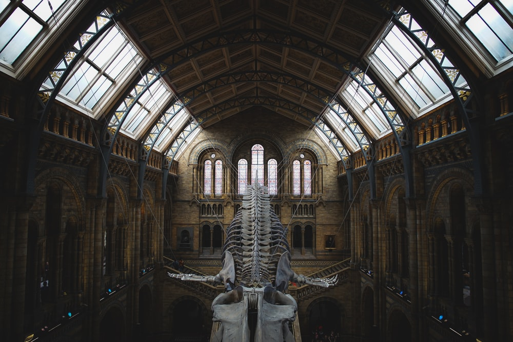 museum interior with hanged whale skeleton