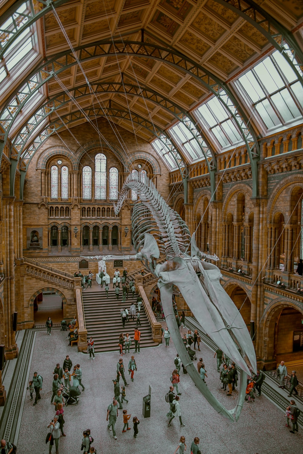 brown museum interior with whale skeleton hanged