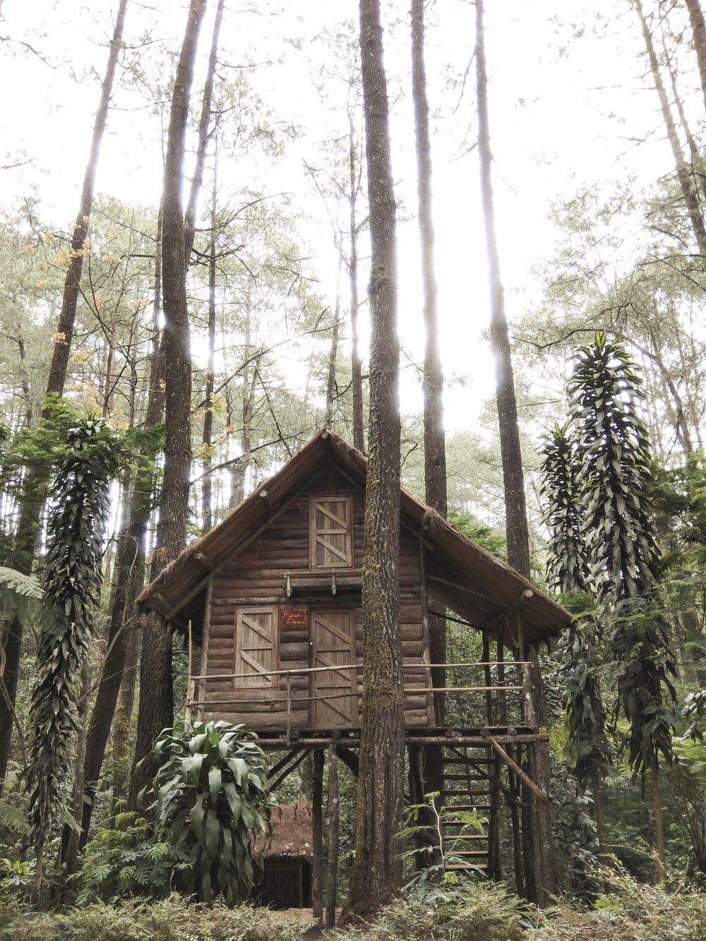 brown wooden house on forest under white sky